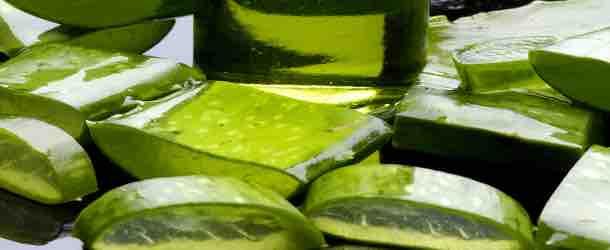Aloe Vera Gesichtswasser selber machen