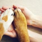 Tierversuche in der Kosmetikindustrie